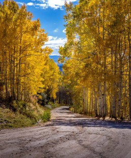 road leading through fall colors in an aspen grove
