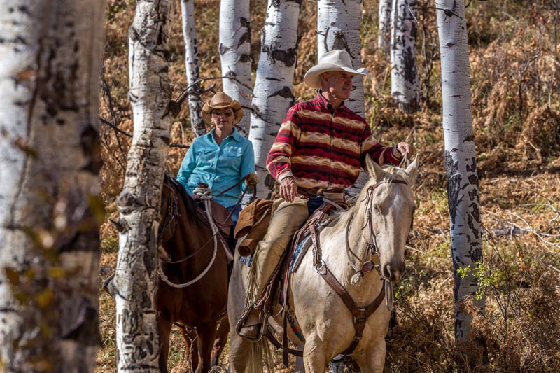 Hive 180 Chamber Fall HORSE RIDING 2017 1 - Photography