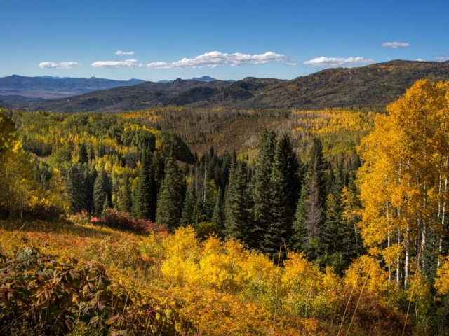 fall buffalo pass 2015 web 1 1024x683 640x480 c - Photography