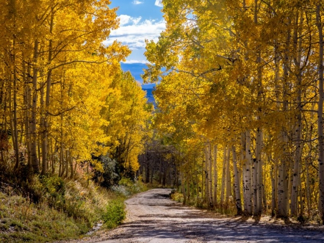 fall buffalo pass 2015 web 4 847x1024 640x480 c - Photography